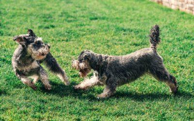 Gadgets til den nybagte hundeejer